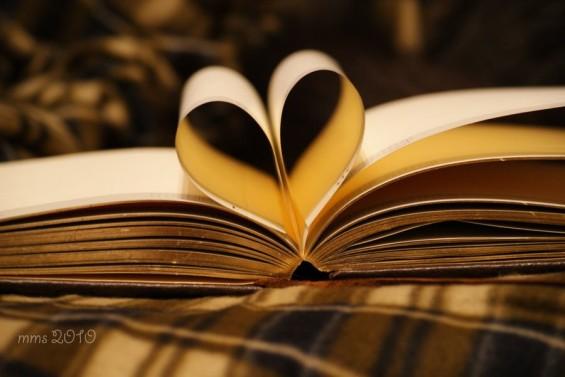 Tłumacz literatury